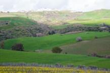 landscape-0849