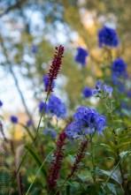 colours of autumn web-9885717