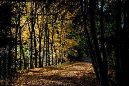 colours of autumn web-9885727