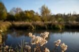 colours of autumn web-9885748