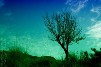lonely tree 01