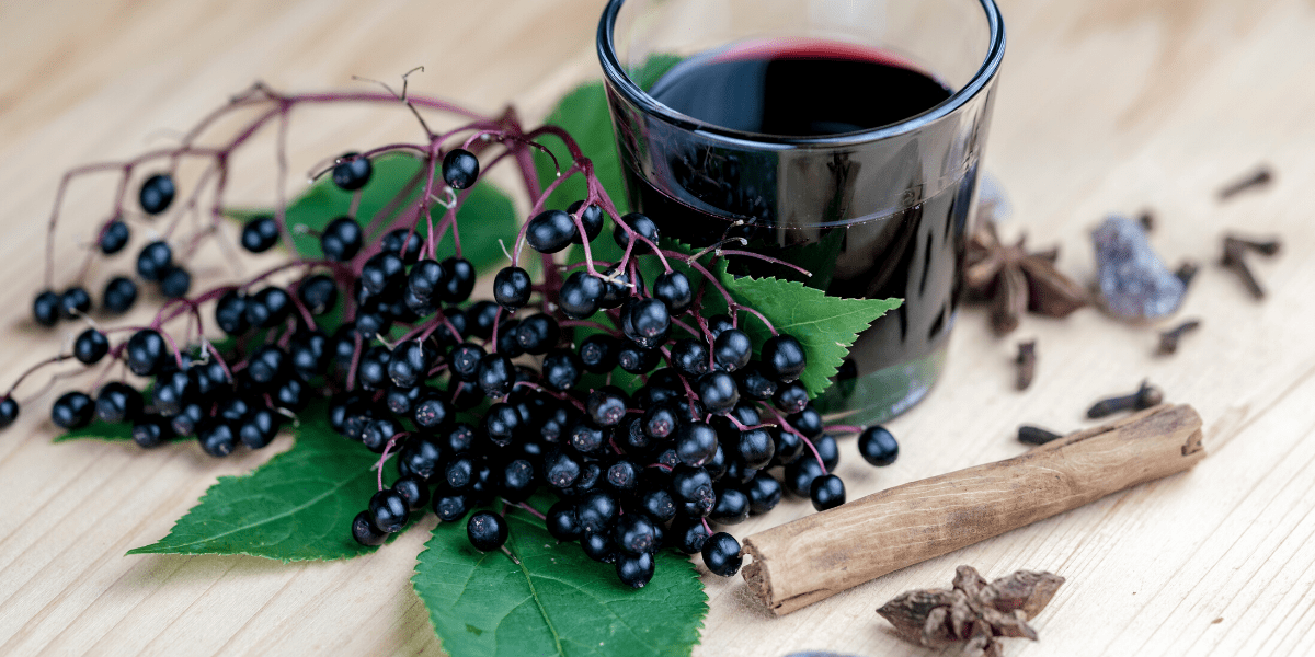 Elderberry autoimmune disease