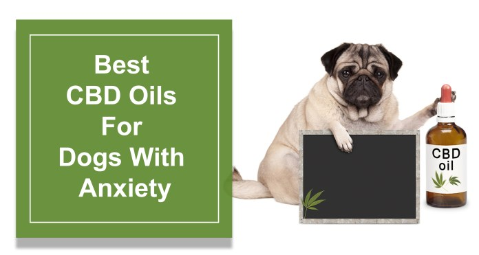 Best CBD Oils For Dogs With Anxiety