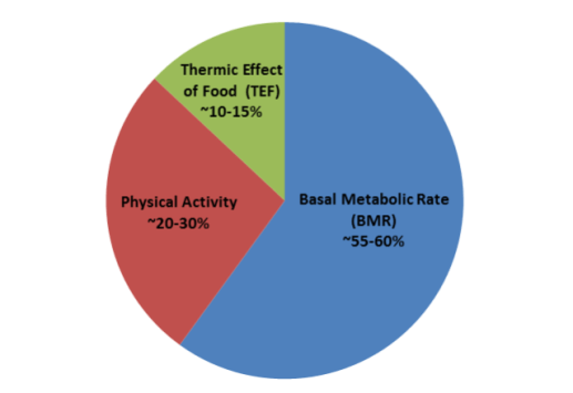 Thermic Effect of Physical Activity