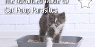 Cat Poop Parasites
