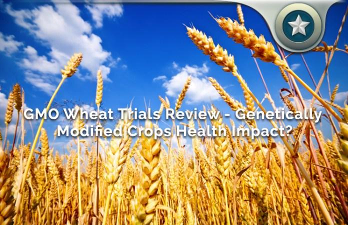GMO Wheat Trials