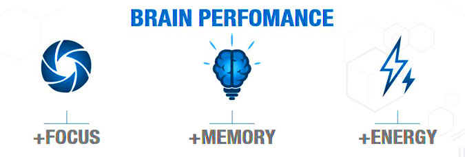 brain performance
