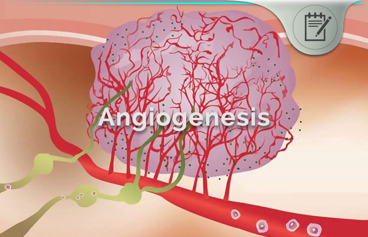Angiogenesis Review - Blood Vessel Endothelial Cell Growth