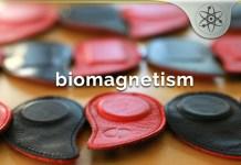 Biomagnetism