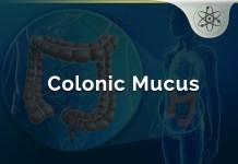 Colonic Mucus