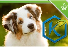 Kannaway-CBD-Hemp-Pet-Products