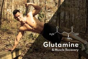 Glutamine and Muscle Recovery