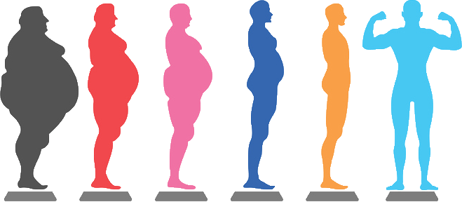 how you can lose weight with phenterage garcinia. The stages of weight loss.