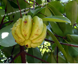 The ugly Garcinia Cambogia fruit.