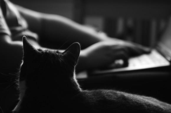 cat-watching