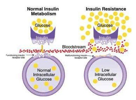 normal-vs-insulin-resistant-cells