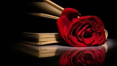 O Nome da Rosa: Enredo e Significado da obra de Umberto Eco - Luigi Angelino 5