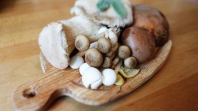Foto de Cogumelos medicinais: 4 benefícios apoiados pela ciência