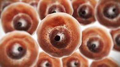 Células imunológicas geneticamente modificadas