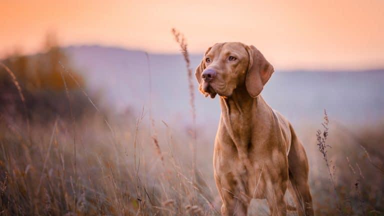Photo of Tudo o que você precisa saber para ter e cuidar bem de um cachorro
