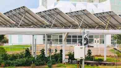 agricultura sob painéis solares com sustentabilidade