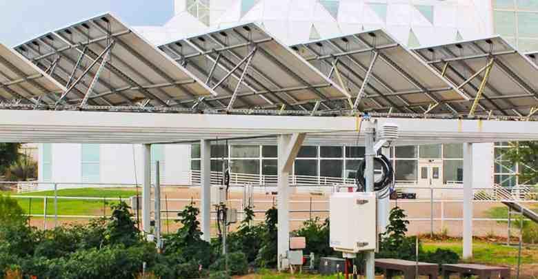 Photo of A agricultura sob painéis solares economiza água e cria energia