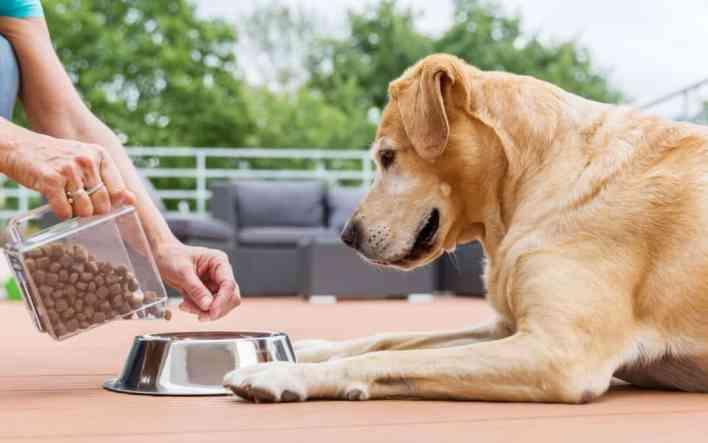 cuidar bem de um cachorro com boa alimentação