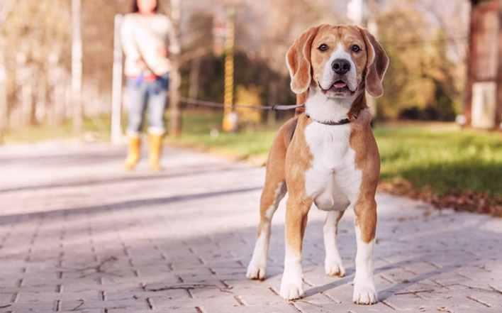 para cuidar bem de um cachorro leve-o para passear
