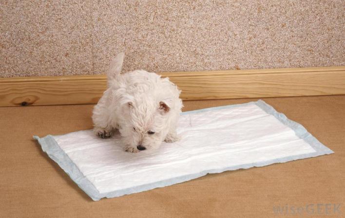 cuidar bem de um cachorro com tapete higiênico