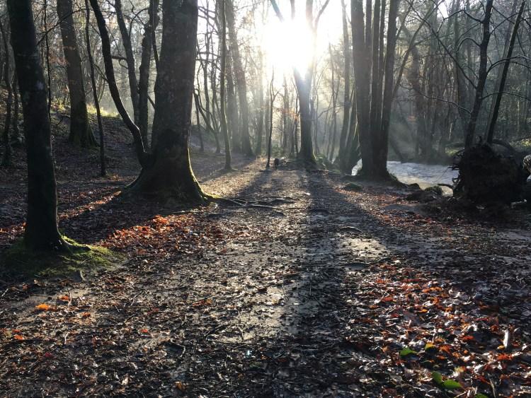 Guided walk along the Primrose Railway Line