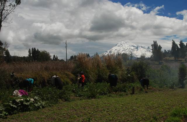 Trabajando al pie del Chimborazo