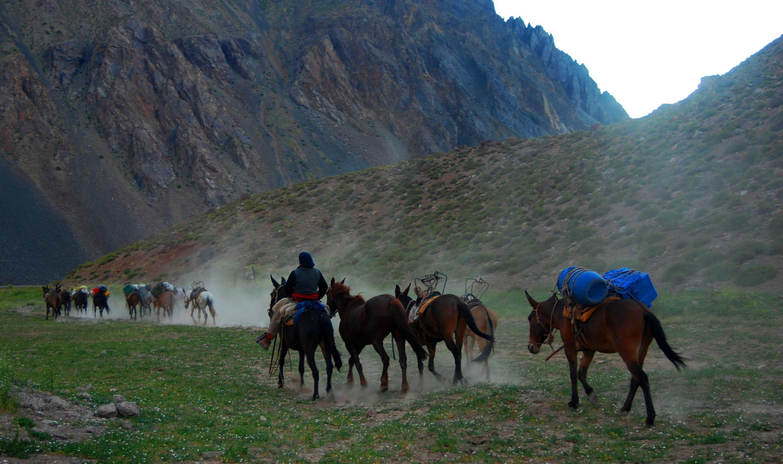 los caballos llevan la carga
