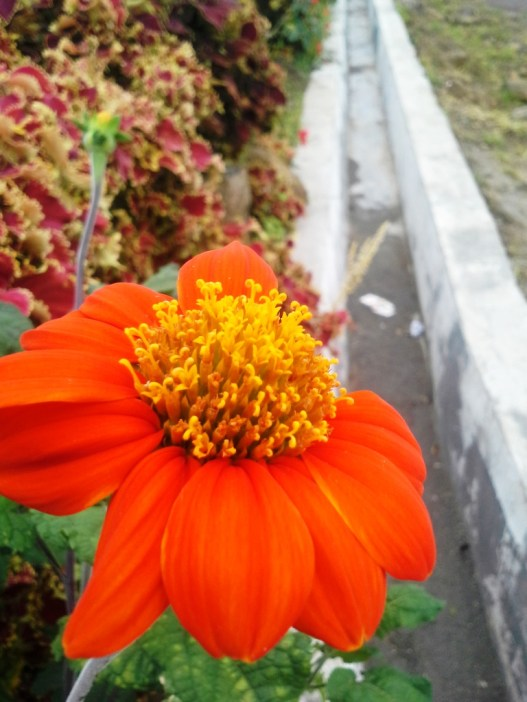 flower with orange color