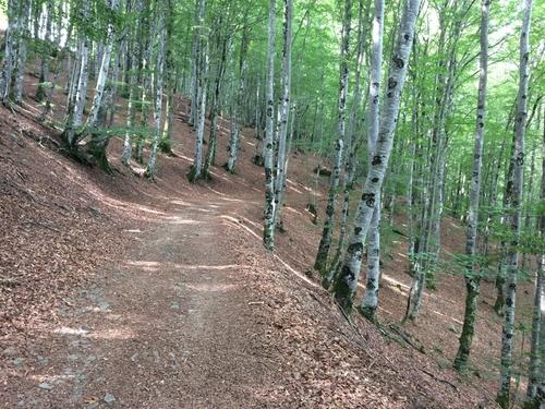 chemin vers Saint Côme d'old