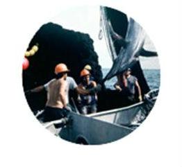Proponen implementar moratoria para limitar el uso de redes de cerco atunero y favorecer a pescadores costarricenses