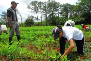 investigaciones-de-la-ucr-benefician-a-productores