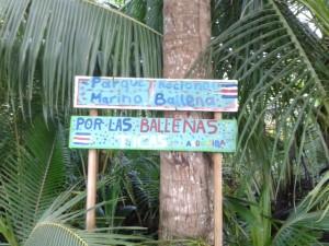 El cambio climatico ya tiene un impacto en el Parque Nacional Marino Ballena3
