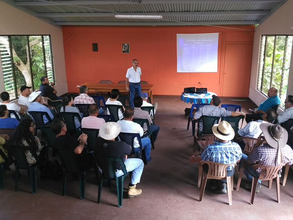 UCR Caneros incursionan en alimentacion para ganado2