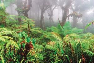 UCR Los tesoros de la Isla del Coco seran analizados desde distintas ciencias
