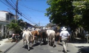 Cada tres de marzo se lleva a cabo en Libera la celebración del Tope de Toros, tradición declarada Patrimonio Cultural Intangible. Foto cortesía TC-160