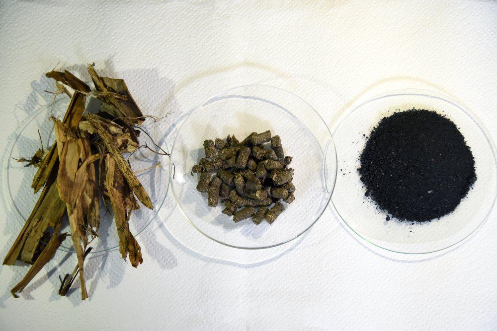 UCR El biocarbon o biochar una alternativa novedosa al tratamiento de los desechos de la pina