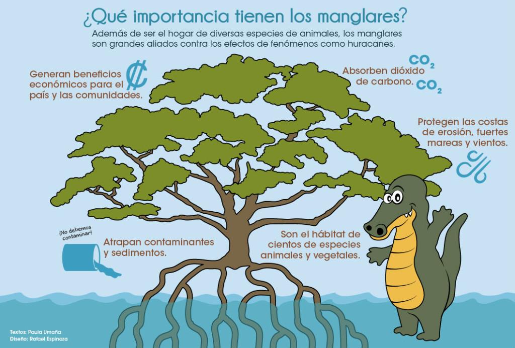 UCR Manglares escudos naturales en riesgo2