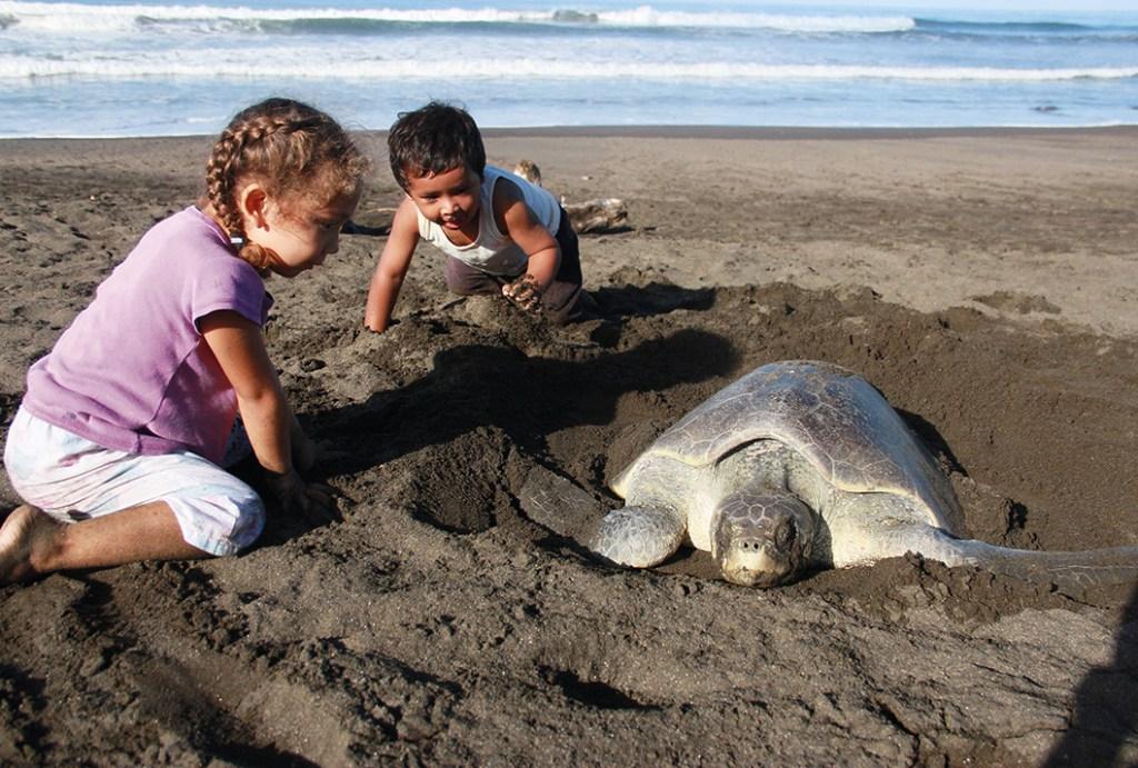 UCR La proteccion de tortugas marinas debe extenderse al mar2