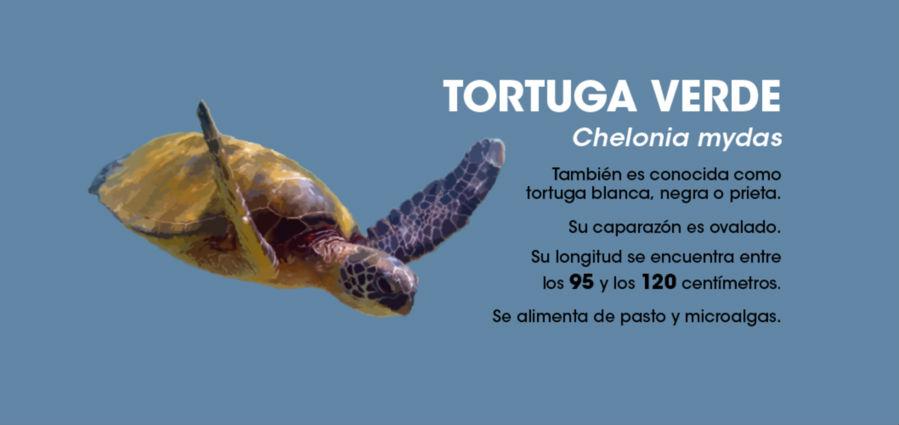 UCR La proteccion de tortugas marinas debe extenderse al mar7