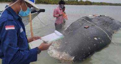 Esta ballena tragó miles de residuos plásticos