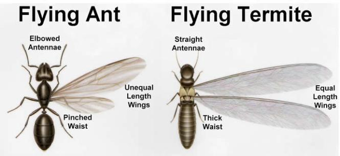 Swarming Termites And Flying Ants In Maryland Dc Virginia