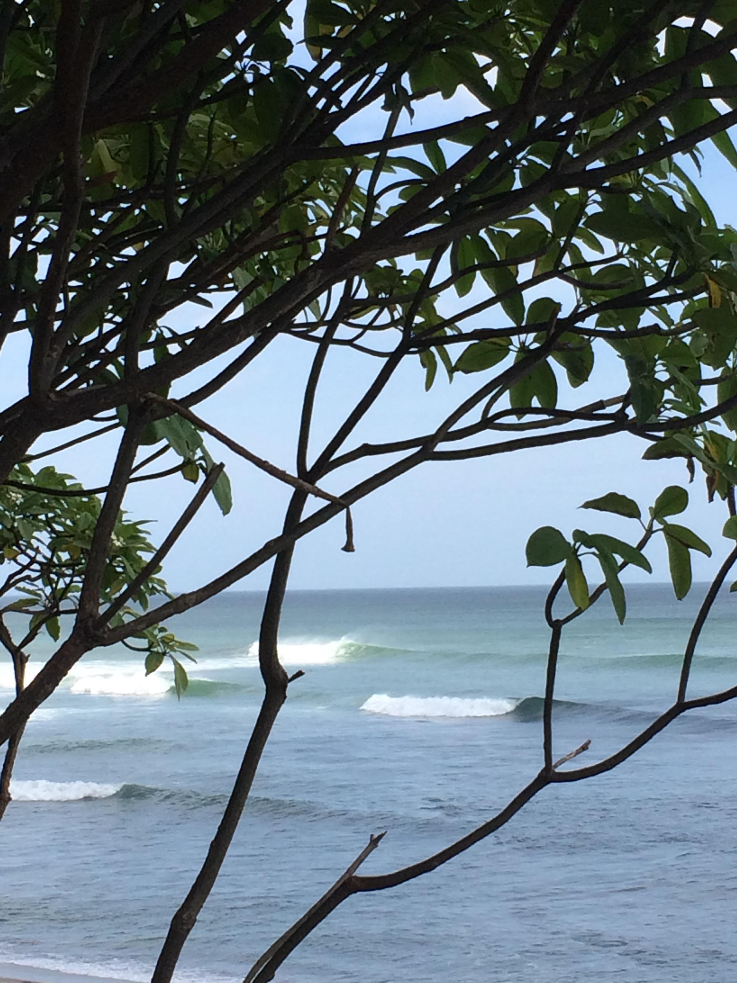 Surf trip Popoyo - Multipack arbres