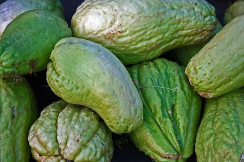 Chayote super aliment au Nicaragua