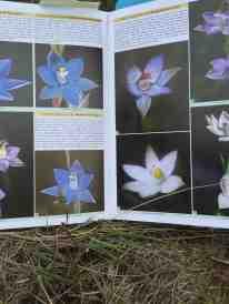 orchid-pics