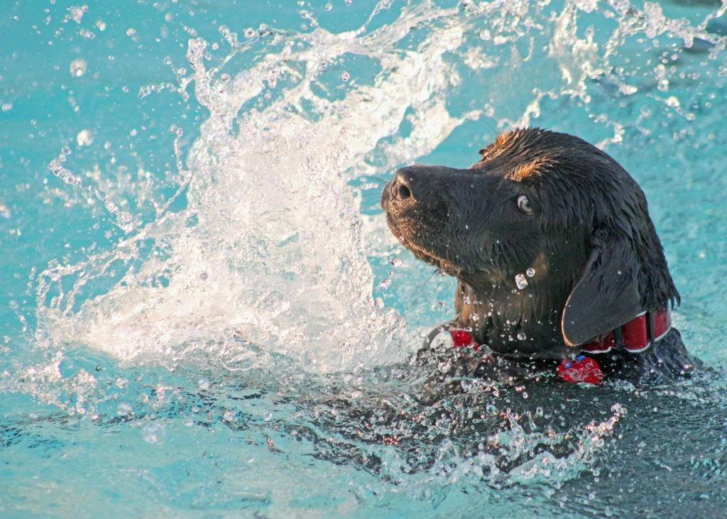 pool safety for pets